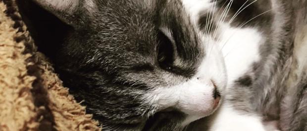 nya_cat02